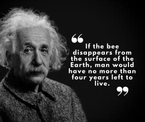 Einstein despre albine